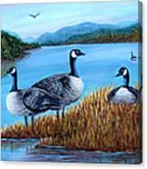 Canada Geese - Lake Lure Canvas Print