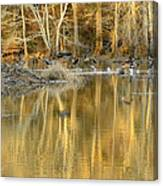 Canada Geese On A Golden Morning Canvas Print