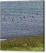 Canada Geese Panorama-signed-8x38 Canvas Print