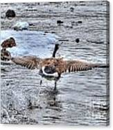 Canada Goose - The Runway Canvas Print