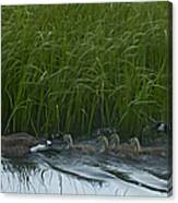Canada Goose Family   #7453 Canvas Print