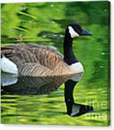 Canada Goose On Green Pond Canvas Print