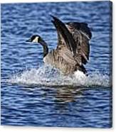 Canada Goose Pictures 111 Canvas Print