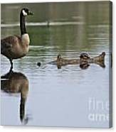 Canada Goose Pictures 172 Canvas Print