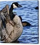 Canada Goose Pictures 84 Canvas Print