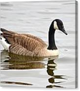 Canada Goose Reflecting In Calm Waters Canvas Print