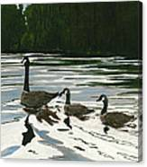 Canadas On Wilson Lake Nc Canvas Print