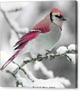 Canadian Cardinal Canvas Print