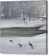 Canadian Geese In Winter Canvas Print