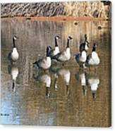 Canadian Geese Watching Canvas Print