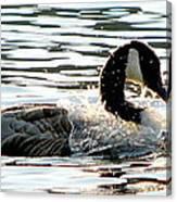 Canadian Goose Wash Canvas Print