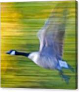 Canadian In Flight Canvas Print