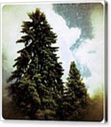 Canadian Pines Canvas Print