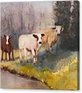Canal Cows Canvas Print