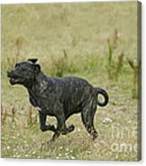 Canary Dog Running Canvas Print