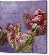 Cancan Parrot Tulips Canvas Print