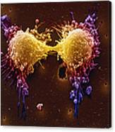Cancer Cell Division Canvas Print