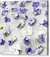 Candied Violets Canvas Print