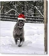 Cane Corso Christmas Canvas Print