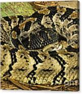 Canebrake Rattlesnake Canvas Print