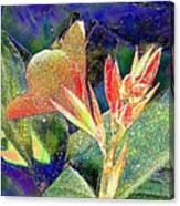 Canna 1 Canvas Print