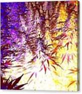 Canna Dusk 1 Small Canvas Print