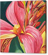 Canna Lily 2 Canvas Print