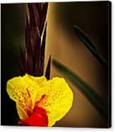 Canna Lily 2 Canvas Print