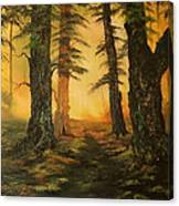 Cannock Chase Forest In Sunlight Canvas Print