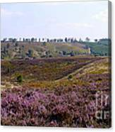 Cannock Chase Heather 4 Canvas Print