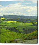 Canola Country Road Canvas Print