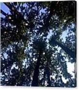 Canopy High Canvas Print