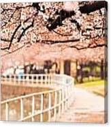 Canopy Of Cherry Blossoms Over A Walking Trail Canvas Print