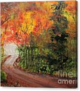 Canopy Of Colors Canvas Print