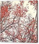 canopy trees II Canvas Print