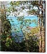 Canopy Vista Canvas Print