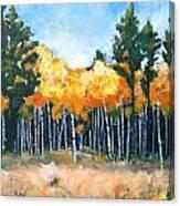 Canyon Aspens Canvas Print