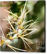 Canyon Cactus Canvas Print