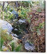 Canyon Creek Canvas Print