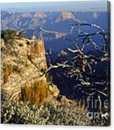 Canyon Foliage Canvas Print