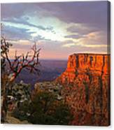 Canyon Rim Tree Canvas Print