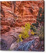 Canyon Walls Canvas Print