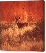 Canyonland Mule Deer Canvas Print
