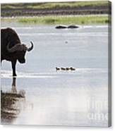 Cape Buffalo And Baby Eygptian Geese   #0375 Canvas Print
