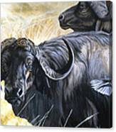 Da206 Cape Buffalo By Daniel Adams Canvas Print