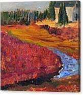 Cape Cranberry Bog In Season Canvas Print