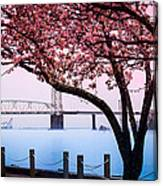 Cape Fear Of Wilmington Canvas Print