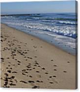 Cape Hatteras - Mermaid's Purse Laiden Beach Canvas Print
