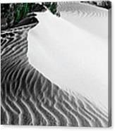 Cape Le Grande Sand Dune Canvas Print