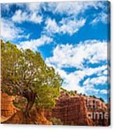 Caprock Canyon Tree Canvas Print